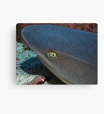 The Eye of a White Tip Reef Shark Canvas Print