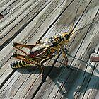 BIIIIGGGG Grasshopper! by Marita Sutherlin