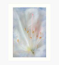 White and Pink Azalea Art Print