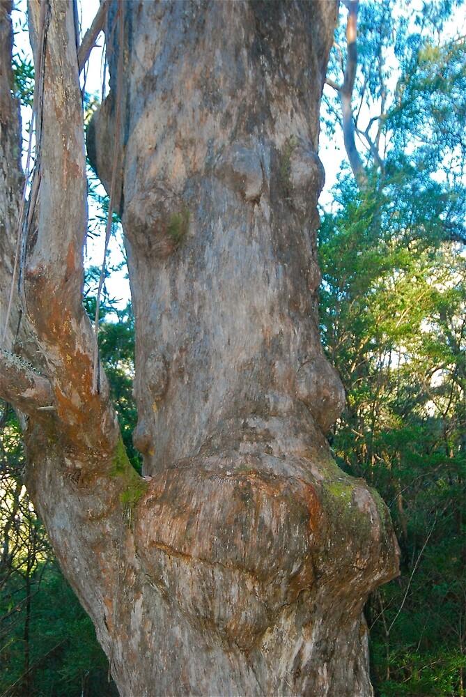 Tree Face by Penny Smith