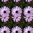 Purple Daisy by juliacreates