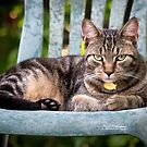 Sitting Pretty by Mikell Herrick