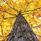 leaves of gold up there by ANNABEL   S. ALENTON