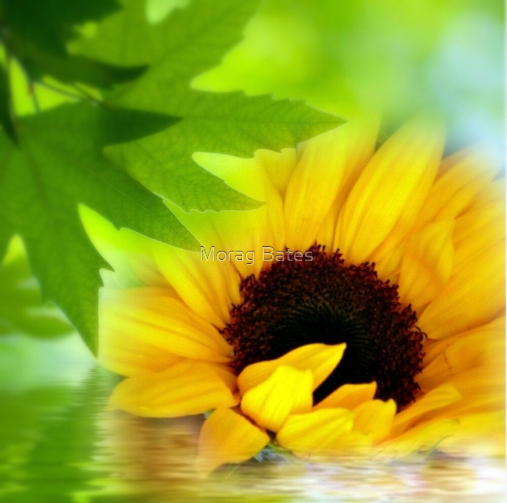 A Sunflower in Shade by Morag Bates