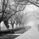 Fog in the Park by Joel Bramley