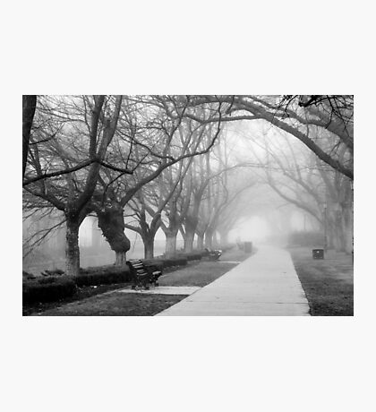 Fog in the Park Photographic Print