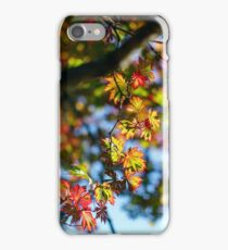 Autumn Trees iPhone Case/Skin