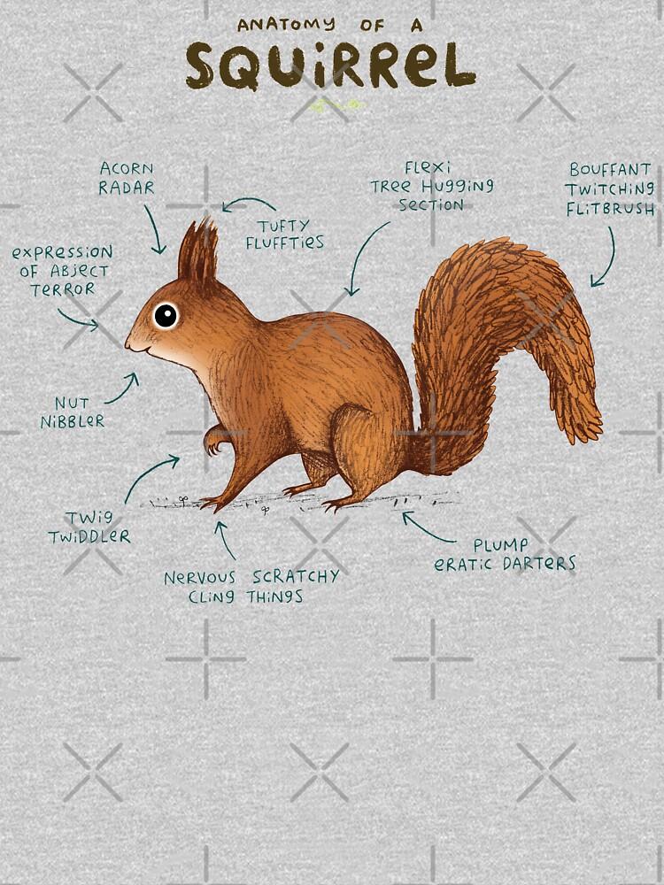 Anatomía de una ardilla de SophieCorrigan