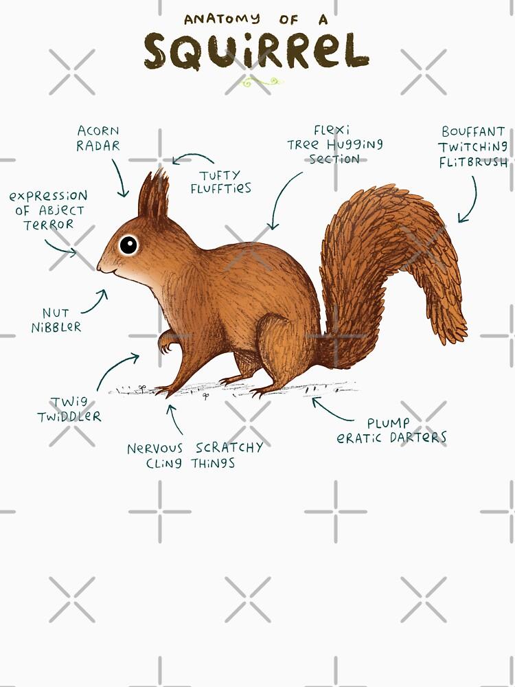 Anatomie eines Eichhörnchens von SophieCorrigan
