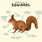Anatomy of a Squirrel by Sophie Corrigan