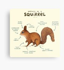 Anatomy of a Squirrel Metal Print