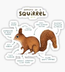Anatomy of a Squirrel Sticker
