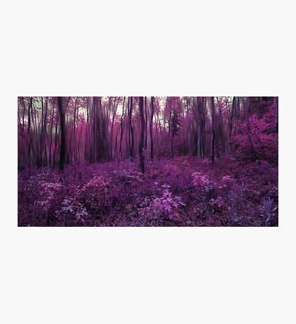 Purple forest Photographic Print