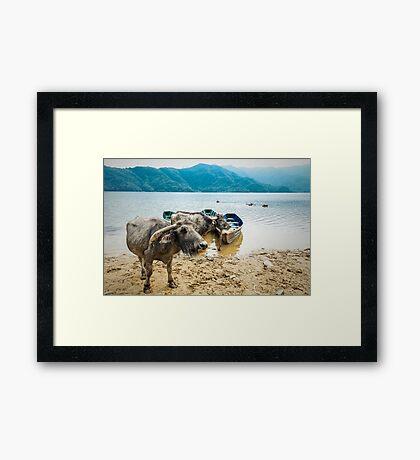 Water Buddies Framed Print