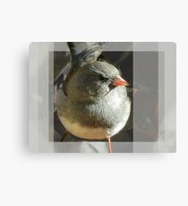 The Little Dark-eyed Junco Canvas Print