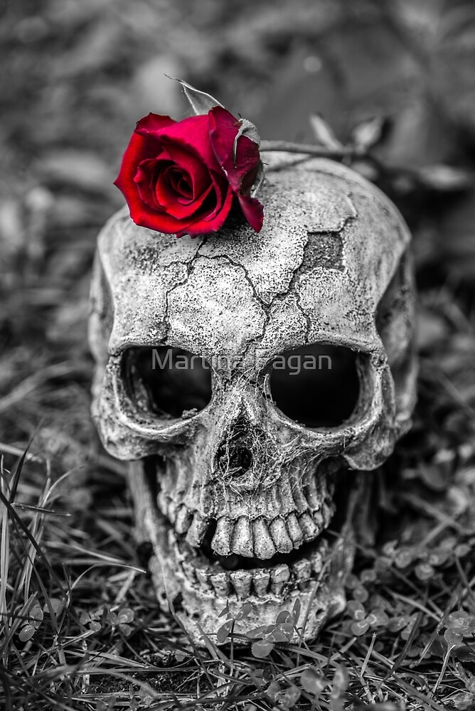 Rose Skull by Martina Fagan