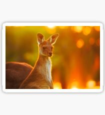 Sunset Joey, Yanchep National Park Sticker