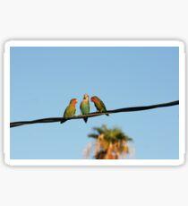 Peach-faced Lovebirds Sticker
