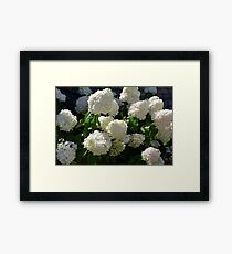 Natural background with bunch of white flowers Framed Print