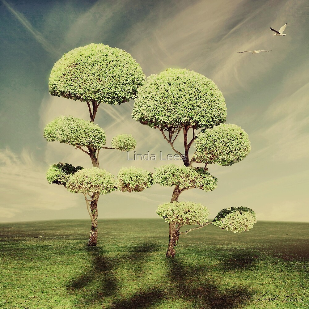 The Land of the Lollipop Trees by Linda Lees