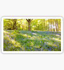 Spring Woods  Sticker