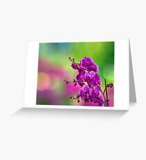 purple orchid flower on blur background Greeting Card