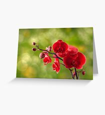 red orchid flower on blur background Greeting Card