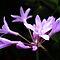 *Purple Petals - Gorgeous Flower Cards*