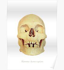 Crâne homme - homo sapiens Poster