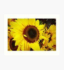 *Sunflowers at the Market* Art Print