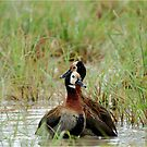 YEAH, FRIENDS FOR-EVER - WHITE-FACED DUCK - Dendracygna viduata – Nonnetjie-eend by Magriet Meintjes