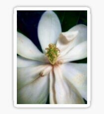 Sweet Bay Magnolia Bloom #2 Sticker