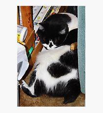 Quincy Sleeping Photographic Print
