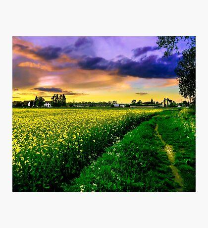 Rapeseed Sunset Photographic Print