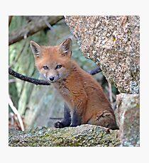 Fox Wildlife Photographic Print