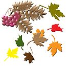 Autumn by designingjudy