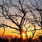 Tree Branches Dancing In The Sunlight by Bo Insogna