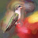 LSD in the Bird Feeder? by Brian104
