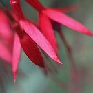 Fuschia, a floral abstract by Agnes McGuinness