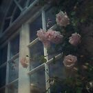 Window Roses by Nikki Smith (Brown)