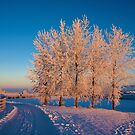 Frozen Poplar Trees at Sunset by Ludwig Wagner