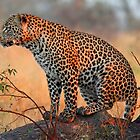 An adolescent young male surveying the land!! von Anthony Goldman