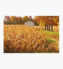 Autumn Corn Photographic Print