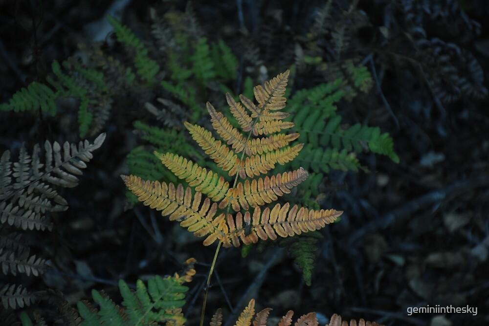 Moody Fern in Forest by geminiinthesky