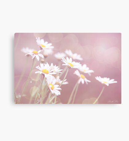 Dreamy Daisies Canvas Print