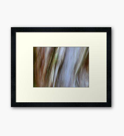 Eucalypt Framed Print