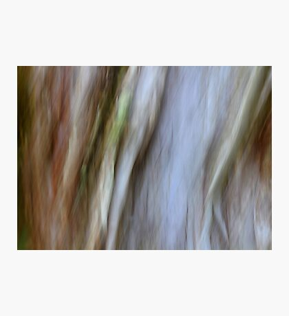 Eucalypt Photographic Print