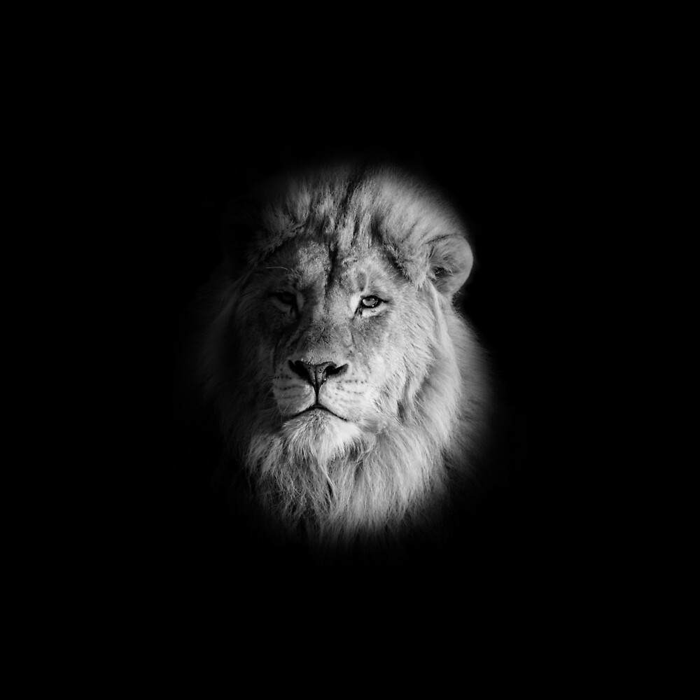 Monochrome Lion Portrait by Cathy Withers-Clarke