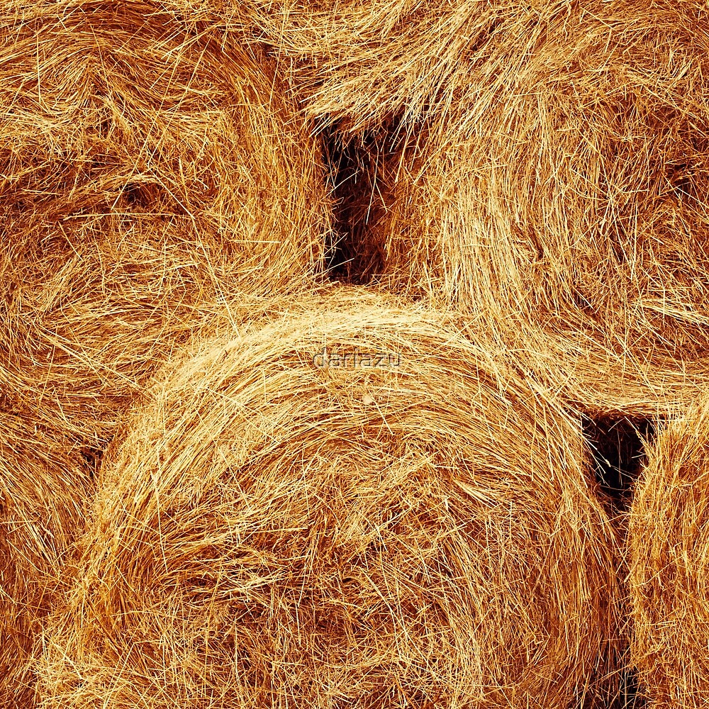 Hay bales texture. Agriculture background  by dariazu