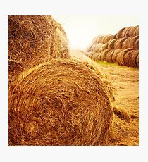 Golden hay bales on the field at summer at sunset light Photographic Print